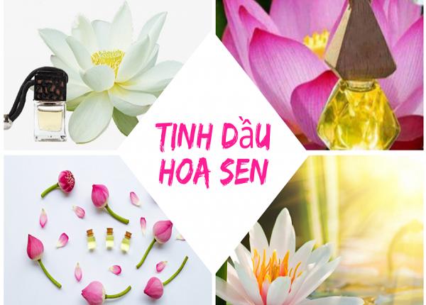 Tác dụng của tinh dầu hoa sen đối với sức khỏe làm đẹp